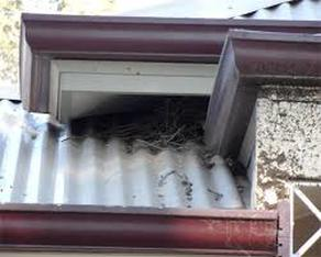 Bird Mite Control in your roof