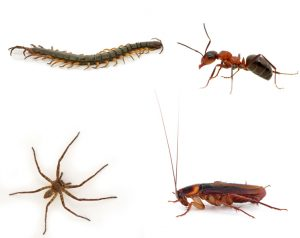 Crawling Insect Control Preotria are specialists at structural Pest Management.