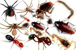 Insect Control Despatch treat homes and business throughout greater Pretoria.