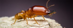 Super Termite and Formisan Termite Extermination can be carried out by Pretoria Pest Control