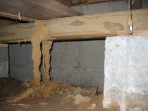 Termite Control Pretoria can prevent damage and loss from a Termite Infestation