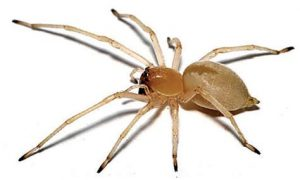 Spider Control Zwavelpoort are the masters at Spider extermination throughout greater Pretoria