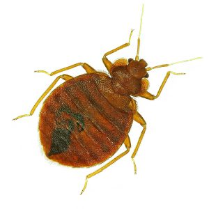 Bed Bug Control Pretoria are the Experts in all aspects of Biting Insect Control in Pretoria, this is another quality service by Pretoria Pest Control