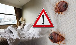 Dont let Bed Bugs ruin you nights sleep, Call your local experts here at Pretoria Pest Control right away!