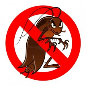 100% Cockroach removal each and every time.
