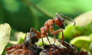 Ant Control Pretoria gan guarantee unparalelled results. Ant Extermination by Pretoria Pest Control